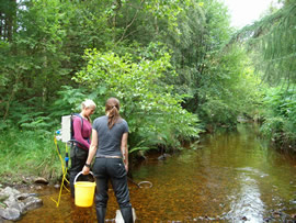Elctrofishing on the Allt na Caillich